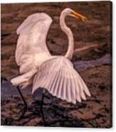 Egret With Fish Canvas Print