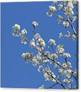 Flowering Trees Canvas Print