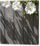 3 Flowers On The Fence Canvas Print