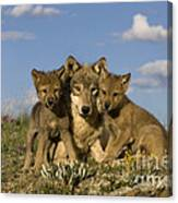 Gray Wolf And Cubs Canvas Print