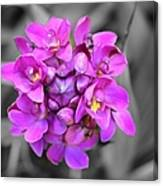Fuchsia Ground Orchid Canvas Print