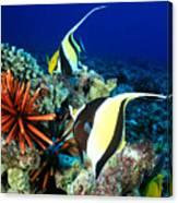 Hawaiian Reef Scene Canvas Print