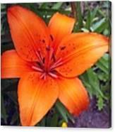 Hemerocallis Flower Canvas Print