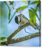 Huthatch Bird  Nut Pecker In The Wild On A Tree Canvas Print