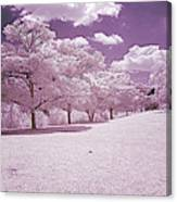 Infrared Garden Canvas Print