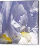 Iris Flowers Canvas Print