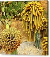 Kaktus Canvas Print