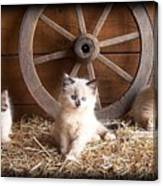 3 Little Kittens With The Wagon Wheel. Canvas Print