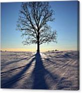 Lone Tree In Snow Canvas Print