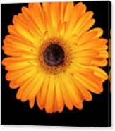 Macro Shot Of Flower Canvas Print
