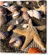 Mix Group Of Seashells Canvas Print