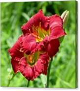 Red Lily Pair Canvas Print