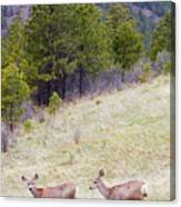 Mule Deer In The Pike National Forest Canvas Print