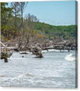 Palmetto Forest On Hunting Island Beach Canvas Print