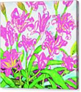 Pink Daily Lilies Canvas Print