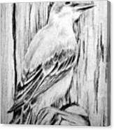 Pitirre Canvas Print