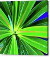Plants And Flowers In Hawaii 547 C Canvas Print