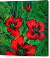 3 Red Poppies Canvas Print
