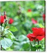 Red Roses Garden Spring Season Canvas Print