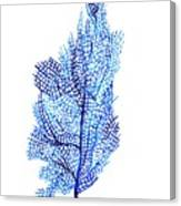 Sea Fan Canvas Print