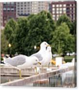 3 Seagulls In A Row Canvas Print