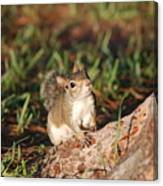 3- Squirrel Canvas Print