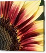 Sunflower Named Ruby Eclipse Canvas Print