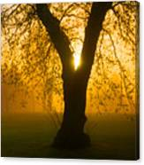 Sunrise Trees Fog Canvas Print