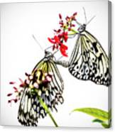 The Extraordinary Rice Paper Butterfly A Series Canvas Print