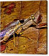 Tropical Mantispid Canvas Print