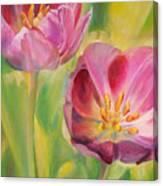 Tulipes Canvas Print