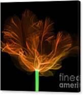 Tulips, X-ray Canvas Print