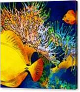 Underwater. Fish. Canvas Print