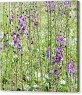 Verbascum Phoeniceum In The Meadow Canvas Print
