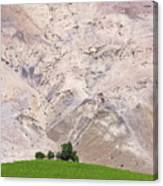 Vines In The Atacama Desert Chile Canvas Print