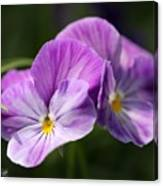 Viola Named Columbine Canvas Print