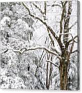 Winter In Monongahela National Forest Canvas Print