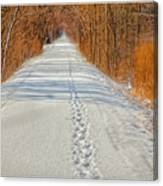 Winter On Macomb Orchard Trail Canvas Print