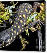 Yellow Spotted Tropical Night Lizard Canvas Print