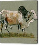 Zebu Cattle Art Painting Canvas Print