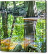 cypress forest and swamp of Congaree National Park in South Caro Canvas Print
