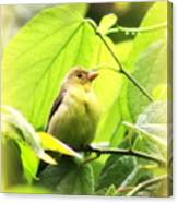 3154 - Tanager Canvas Print