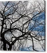 Trees Sky And Clouds Canvas Print