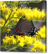 3454 - Butterfly Canvas Print