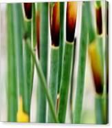 Bamboo Grass Canvas Print