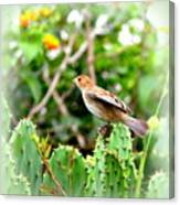 3546 - Tanager Canvas Print