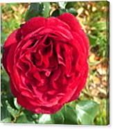 La Vie En Rose  Canvas Print