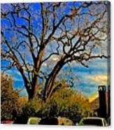 365 012716 Ancient Valley Oak And Parking Canvas Print
