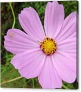 Australia - Mauve Flowers Canvas Print