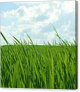 38744 Nature Grass Canvas Print